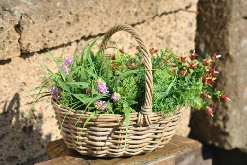 Weidenkorb,Einkaufskorb,Pflanzkorb,naturbelassen,mit Henkel,35cm lang