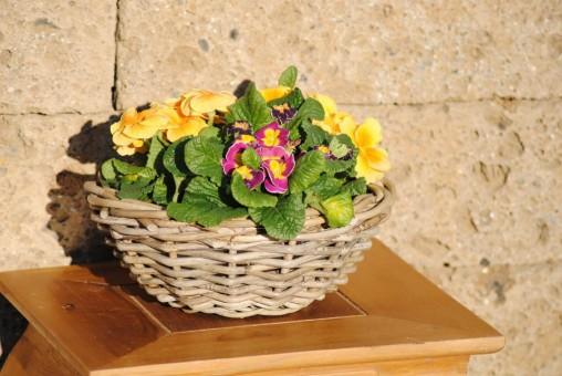 Weidenkorb, sehr stabil, flache Schale, bepflanzbar